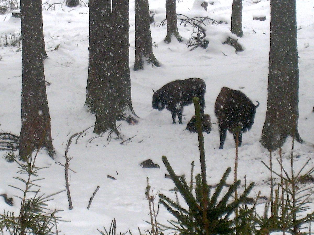 Märchenhaft im dichten Schneegestöber