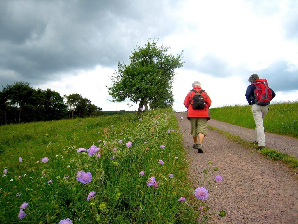 Eifelsteig mit Blumen Top 5 – Die schönsten Eifel-Erlebnisse
