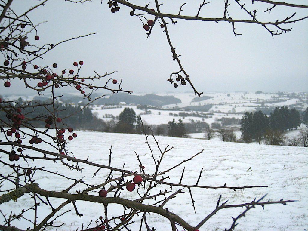 Top 5 – Die schönsten Eifel-Erlebnisse Hohes Venn - Winterlandschaft bei Manderfelt